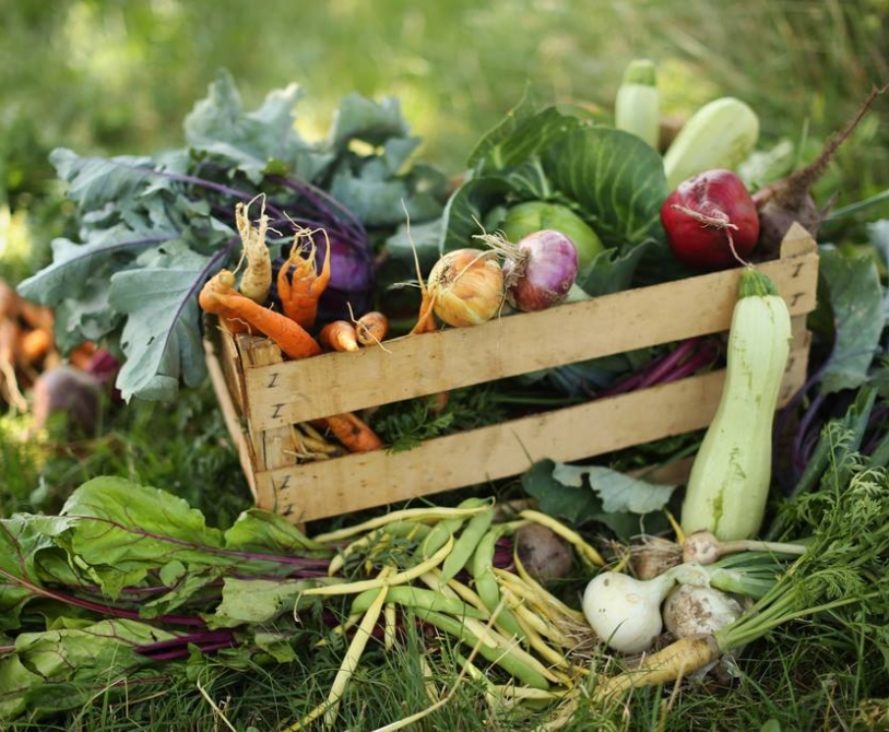 Eko kišta zelenjave