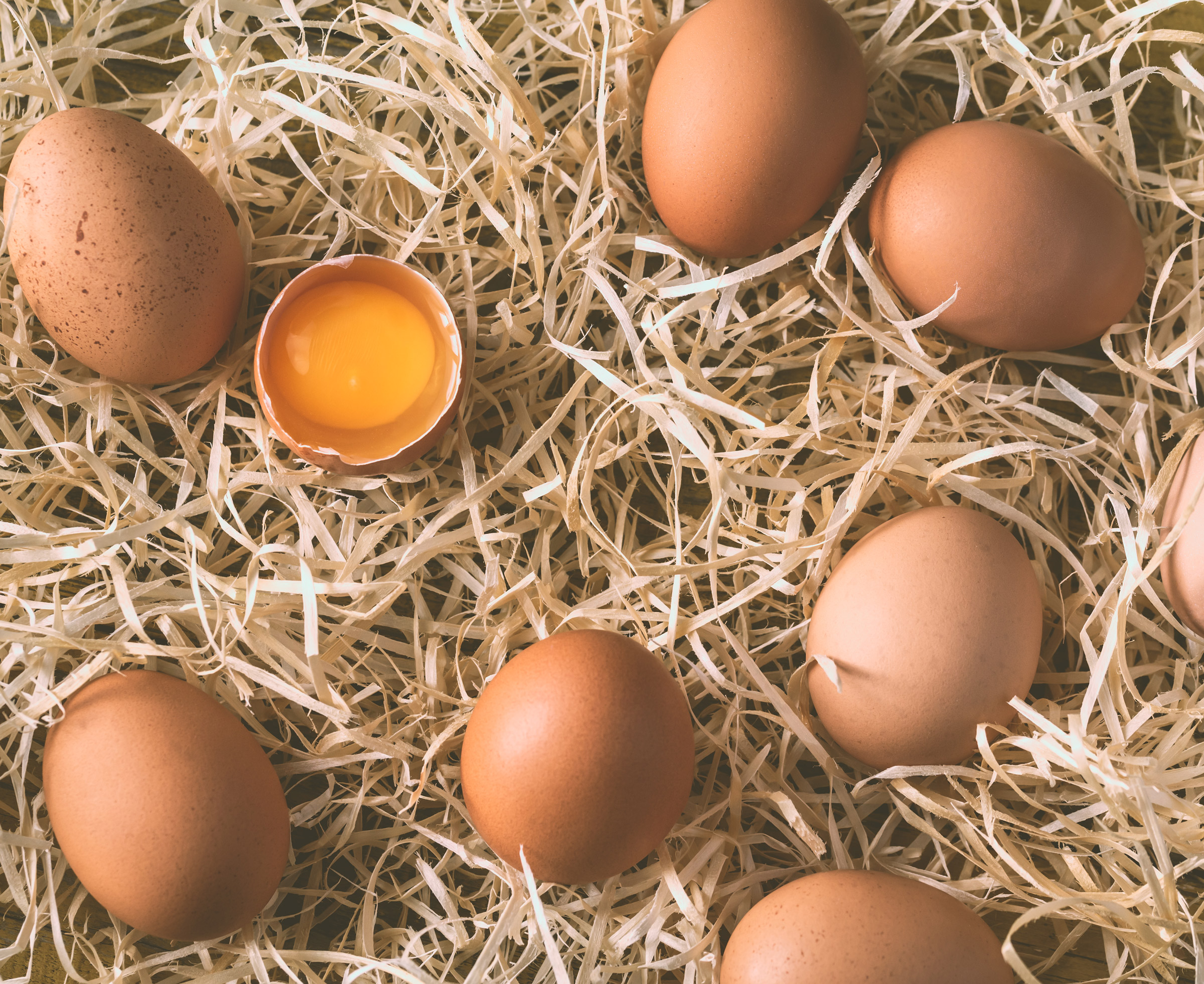Jajca domačih kokoši